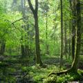 【SS】クワガタが沢山いる森でバルサン焚いたらどうなんの?